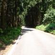 ■杉木立を抜けて